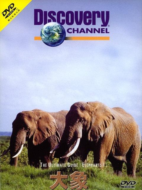 手工制作大象的牙齿